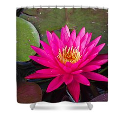 Pink Waterlily Garden Shower Curtain