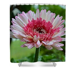 Shower Curtain featuring the photograph Pink Watermelon by Lew Davis