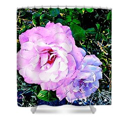 Shower Curtain featuring the photograph Pink - White Roses  2 by Sadie Reneau