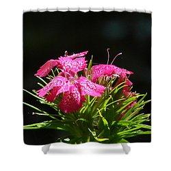 Pink William Shower Curtain