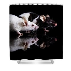 Pinky And Dot Shower Curtain