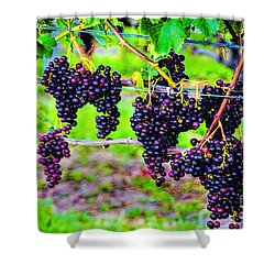 Pinot Noir Grapes Shower Curtain