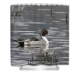 Pintail Duck Shower Curtain