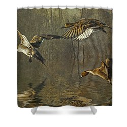 Pintail Ducks Shower Curtain