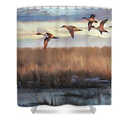 Pintail Fly By Shower Curtain by Rob Corsetti