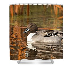 Shower Curtain featuring the photograph Pintail by Kelly Marquardt