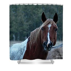 Shower Curtain featuring the photograph Pinto by Ann E Robson