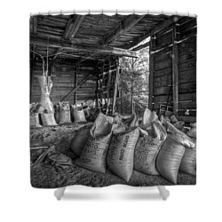 Pinto Beans Shower Curtain by Debra and Dave Vanderlaan