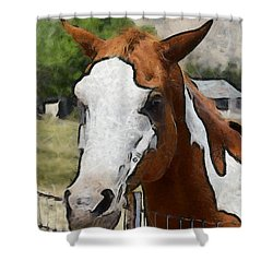Shower Curtain featuring the photograph Pinto In The Pasture Portrait  by Barbara Snyder