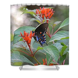 Pipevine Swallowtail Butterfly On Firebush Shower Curtain