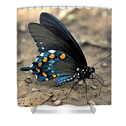 Pipevine Swallowtail Close-up Shower Curtain