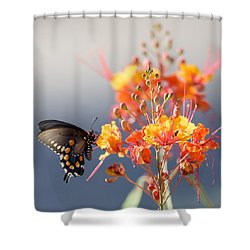 Shower Curtain featuring the photograph Pipevine Swallowtail by Dan McManus