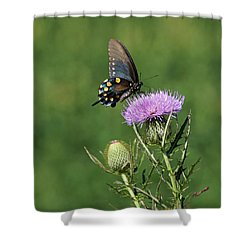Shower Curtain featuring the photograph Pipevine Swallowtail by Sandy Keeton