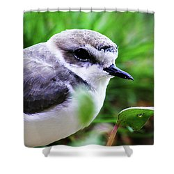 Shower Curtain featuring the photograph Piping Plover by Anthony Jones