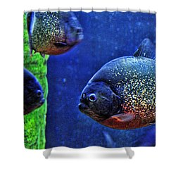 Shower Curtain featuring the photograph Piranha Blue by Jan Amiss Photography