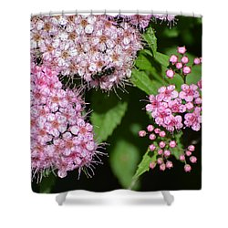 Shower Curtain featuring the photograph Pistol And Stamen Clusters  by Lyle Crump