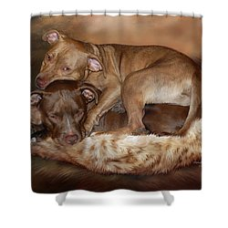 Pitbulls - The Softer Side Shower Curtain