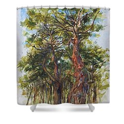 Pitch Pines, Cape Cod Shower Curtain by Peter Salwen