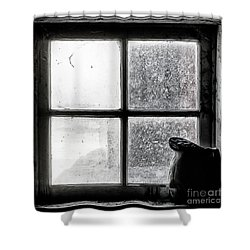 Shower Curtain featuring the photograph Pitcher In The Window by Brad Allen Fine Art