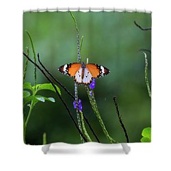 Plain Tiger Butterfly Shower Curtain by David Gn