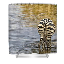 Plains Zebra Shower Curtain