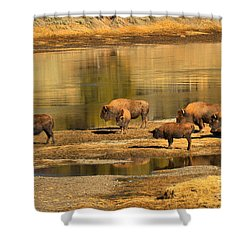 Shower Curtain featuring the photograph Planning To Cross by Adam Jewell