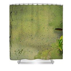Plate 087 - Hummingbird Grunge Series Shower Curtain