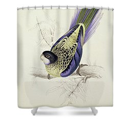 Platycercus Brownii, Or Browns Parakeet Shower Curtain by Edward Lear