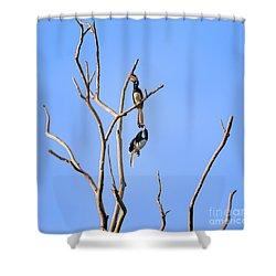 Play Time Hornbills Shower Curtain