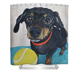 Playful Dachshund Shower Curtain by Megan Cohen