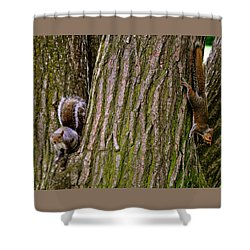Playful Squirrels  Shower Curtain
