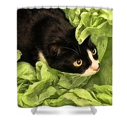 Playful Tuxedo Kitty In Green Tissue Paper Shower Curtain