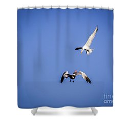Playing Terns Shower Curtain