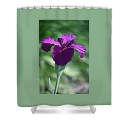 Pleasingly Purple Shower Curtain