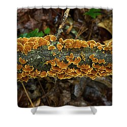 Plethora Of Trukey Tails For Thanksgiving Shower Curtain