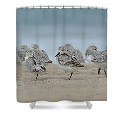 Plover Colony Shower Curtain