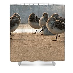 Plovers In The Morning Sunlight Shower Curtain