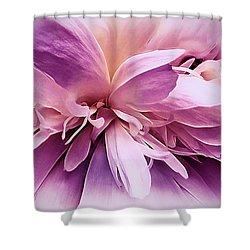 Shower Curtain featuring the photograph Plum Ballet Powder Puff by Darlene Kwiatkowski