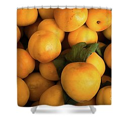 Shower Curtain featuring the photograph Plum Crazy by Sandy Molinaro