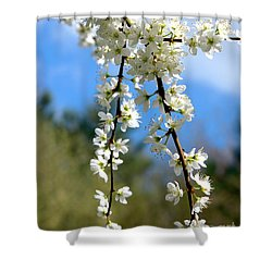 Plum Tree Blossoms Shower Curtain by Baggieoldboy