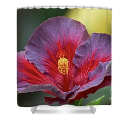 Plum Wonderful Shower Curtain