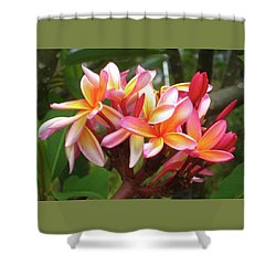 Plumeria - Pink With Yellow Shower Curtain