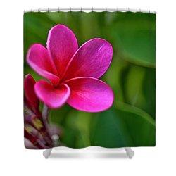 Plumeria - Royal Hawaiian Shower Curtain