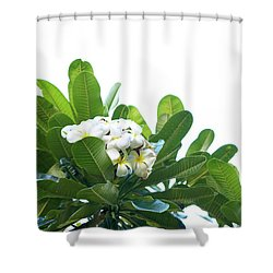 Shower Curtain featuring the photograph Plumeria by Cindy Garber Iverson