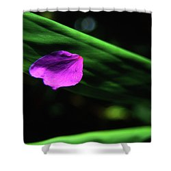 Plumeria Flower Petal On Plumeria Leaf- Kauai- Hawaii Shower Curtain
