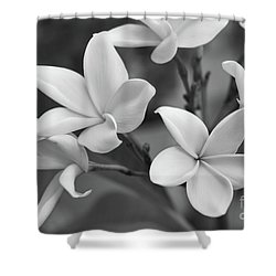 Plumeria Flowers Shower Curtain by Olga Hamilton