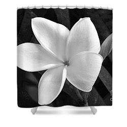 Plumeria In Monochrome Shower Curtain