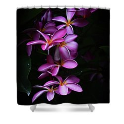 Plumeria Light Shower Curtain by Kelly Wade