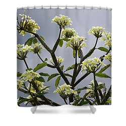 Shower Curtain featuring the photograph Plumeria by PJ Boylan