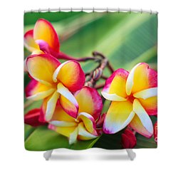 Plumeria Rainbow Shower Curtain